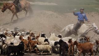 Herders near Shankh Monastery, 2014